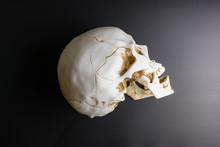 Human Scull With Black Background.
