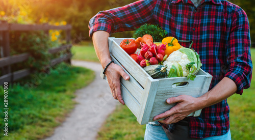 wooden box with fresh farm vegetables close up in men's hands outdoors.