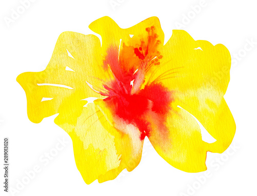 yellow hawaiian hibiscus isolated on a white background. a large and lush blooming watercolor bud.
