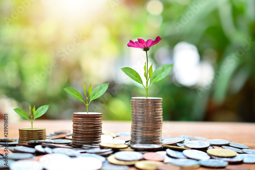 Fototapeta plant money coins saving increase to high profit interest for concept investment mutual fund finance and business obraz