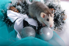 Cute Gray Domestic Rat In A New Year's Decor. Symbol Of The Year 2020 Is A Rat.Blue Background