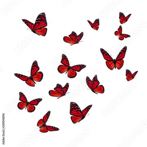 Fotografie, Obraz  Beautiful red monarch butterfly
