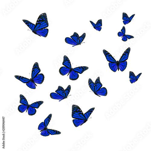 Fotografie, Obraz  Beautiful blue monarch butterfly