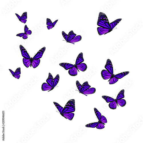 Obraz na plátně  Beautiful purple monarch butterfly