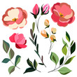 set of vector elements, elegant flowers and leaves, isolate on a white background
