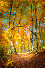FototapetaAutumn path in golden forest
