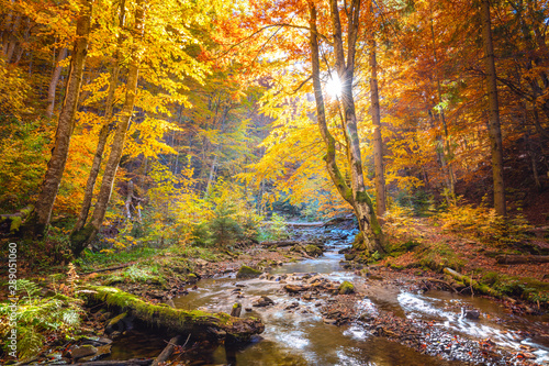 Foto op Aluminium Herfst Autumn in wild forest - vibrantl forest trees and fast river with stones