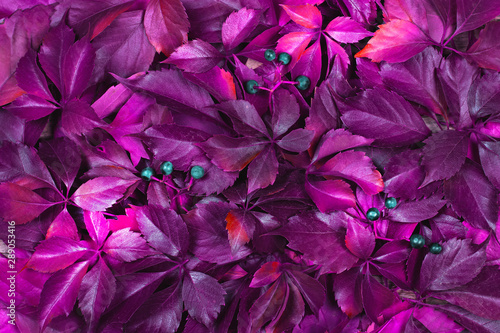 Red autumn leaves on a wooden background. Frame of autumn leaves. #289053416
