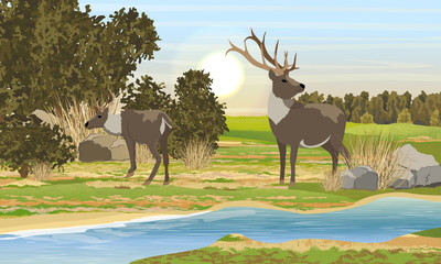 Two realistic red deer with...