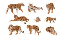 Set Of Realistic Tiger And Cub...