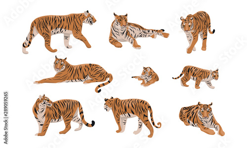 Photographie Set of realistic tiger and cubs in different poses