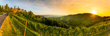 Landscape Panorama Of Vineyard...