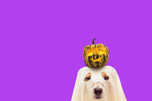 Funny Dog In Halloween Costume...
