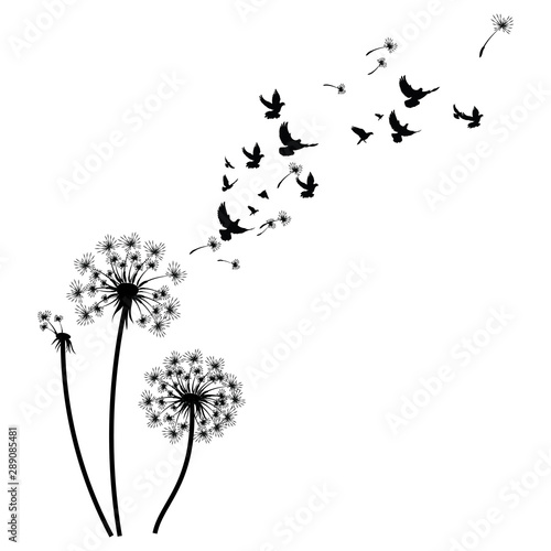 Silhouette of a dandelion with flying seeds Wallpaper Mural