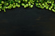 canvas print picture - Hop cones border on black wooden background. Harvesting or brewery concept. Top view. Flat lay.