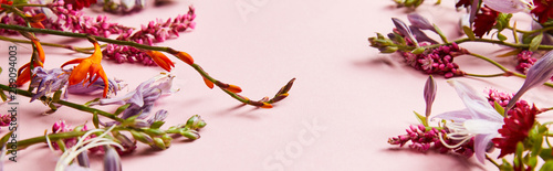 obraz lub plakat panoramic shot of diverse wildflowers on pink background