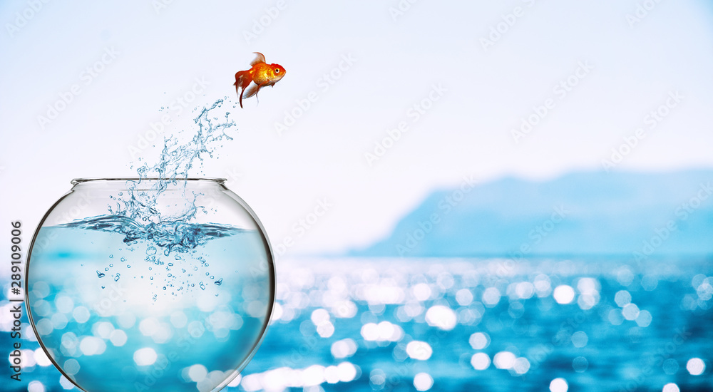 Fototapety, obrazy: Goldfish leaps out of the aquarium to throw itself into the sea