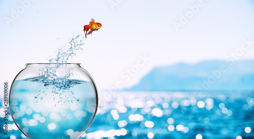 Goldfish leaps out of the aquarium to throw itself into the sea Fototapeta