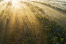 The Sun Rise Under Green Trees Covered By Fog. Aerial View Of Forest At Sunrise. Beautiful Misty Morning.
