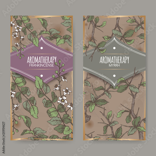 Canvas Print Two color labels with Boswellia sacra aka frankincense and Commiphora myrrha aka myrrh sketch on vintage background