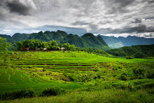 Terraced Green And Yellow Rice Fields Of Pu Luong, Close To Mai Chau In Thanh Hoa Province. Transition Stage To Harvest Season In Pu Luong.