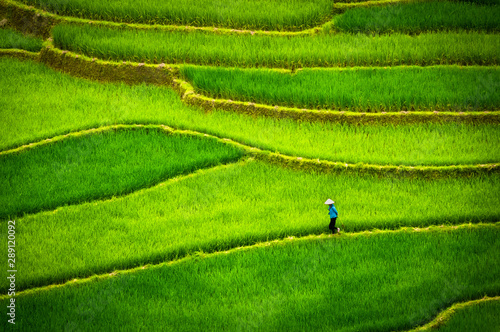 Fotobehang Rijstvelden Tu Le, Vietnam. Man with conical hat on a carpet of rice fields of Tu Le, between Nghia Lo and Mu Cang Chai. Vietnam landscape. Aerial view.