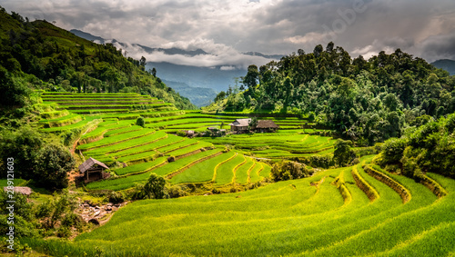 Wall Murals Rice fields Landscape of Vietnam, terraced rice fields of Hoang Su Phi district, Ha Giang province. Spectacular rice fields.