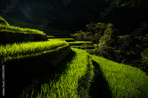 Fotobehang Rijstvelden Landscape of Vietnam, terraced rice fields of Hoang Su Phi district, Ha Giang province. Spectacular rice fields.