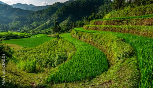Recess Fitting Rice fields Landscape of Vietnam, terraced rice fields of Hoang Su Phi district, Ha Giang province. Spectacular rice fields.