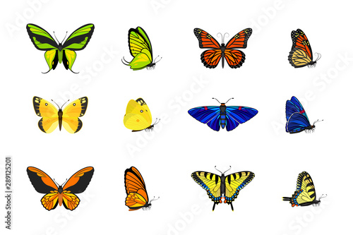 Vector Realistic butterflies collection, common and exotic types of butterflies: Wallpaper Mural
