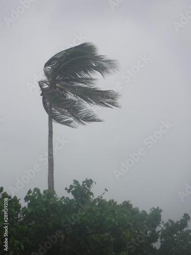 Fotografía Un palmier sous la tempête
