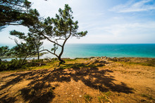 Atlantic Ocean Coastline With Turquoise Blue Water And Pine Trees On A Sunny Summer Day In Brittany France