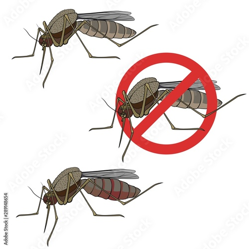 Vector mosquito on a white background, mosquito sucks blood, sign anti insect Wallpaper Mural