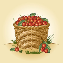 Retro Basket Of Cherries. Edit...