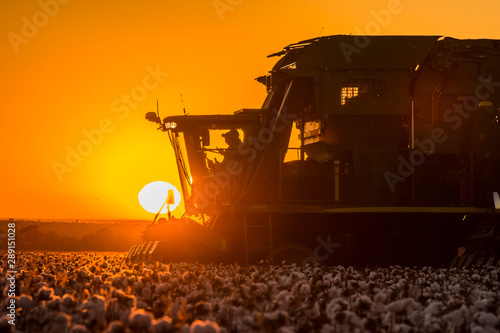 Photo sur Aluminium Marron Cotton Harvest with Sunset Machines