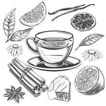Tea Set Isolated On White Background Hand Drawn Vector Illustration Realistic Sketch