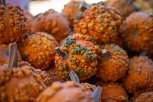 Autum Harvest, Warty Pumpkins