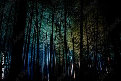Fototapeta  光る竹林