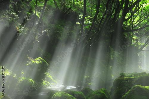 mgla-w-tropikalnym-lesie