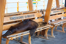 Galapagos Bench