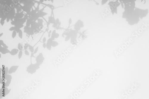 Fototapety, obrazy: Overlay effect for photo. Gray shadow of the wild roses leaves on a white wall. Abstract neutral nature concept blurred background. Space for text.