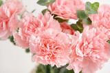 Bouquet of beautiful carnation flowers, closeup