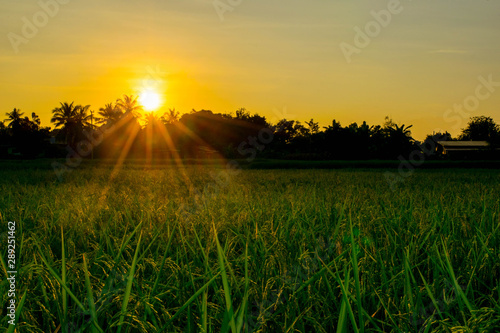 The sunset in the evening in the beautiful orange light rice field in the mountain landscape. Incredible sky World of beauty #289251462