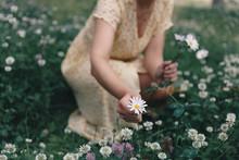 Woman Picking Wildflowers In Meadow