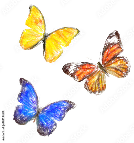 Fotografie, Obraz  set of butterflies of different colors. isolated on white