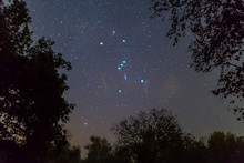 Orion Constellation On The Night Starry Sky Between Dark Tree Silhouette, Outdoor Night Forest Landscape