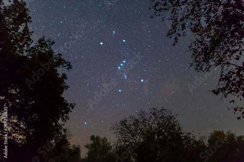 Cuadros en Lienzo Orion constellation on the night starry sky between dark tree silhouette, outdoo