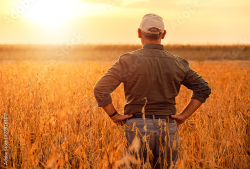 Photo  Rear view of senior farmer standing in soybean field examining crop at sunset