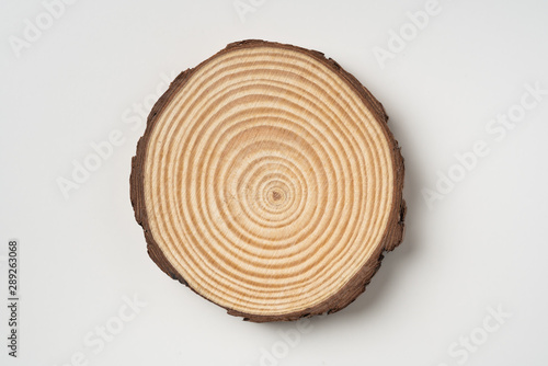 top view of wood piece with annual ring on white Canvas Print