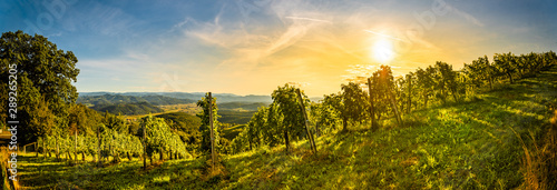 Foto op Aluminium Wijngaard Autumn panorama of Grape rows on vineyard in Austrian town Kitzeck im Sausal Leibnitz